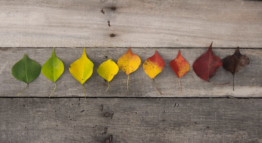 otoño, caida, colores, hojas, hoja, naturaleza, fondo, madera, linea, colores, color, creativo, concepto, estaciones, paso del tiempo, tiempo,