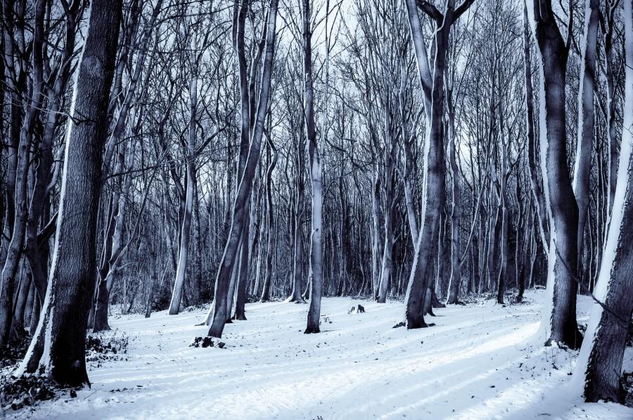 Imagen de cabaña nevada en el bosque   foto gratis