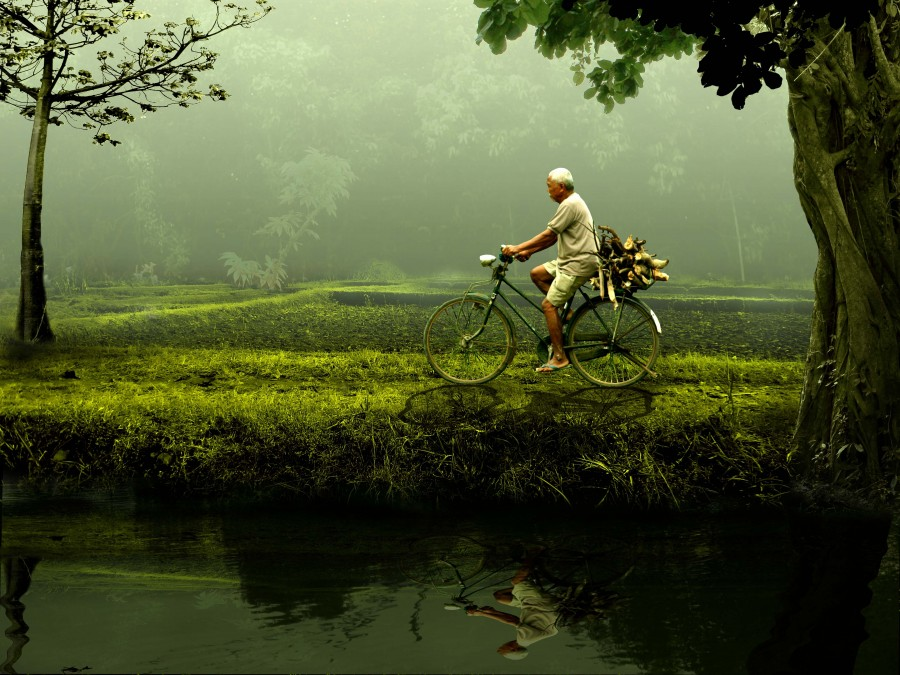 hombre, bicicleta, adulto, 50 años, bicicleta, actividad, transporte, naturaleza, dia, paseo, vietnam, asia, asiatico, verde, bosque, pasear, movimiento,