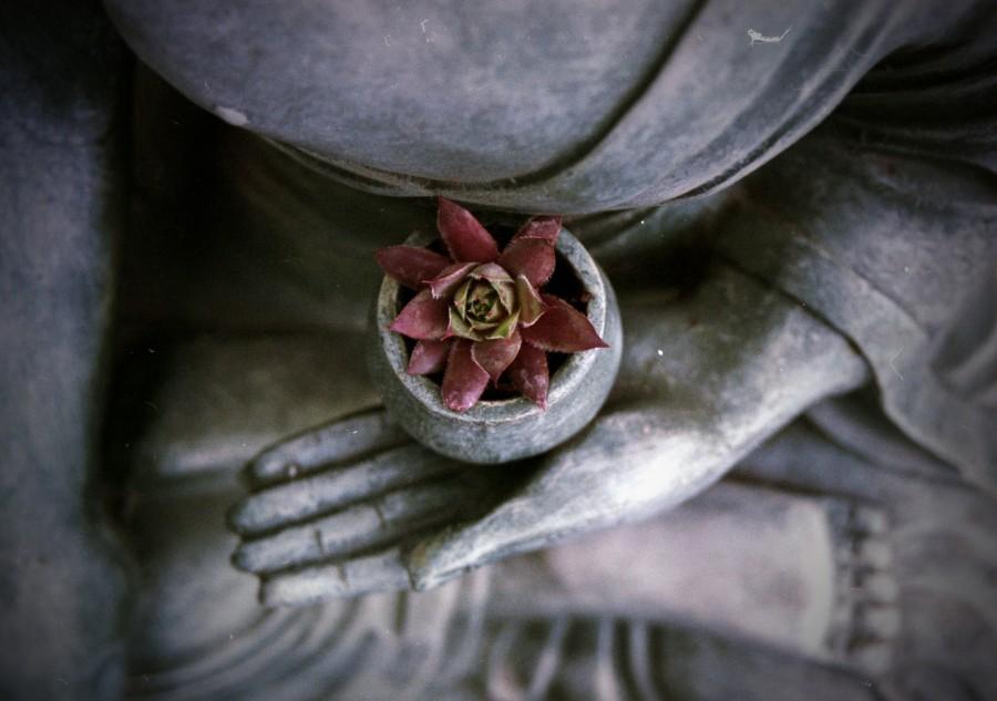 flor de loto, estatua, buda, concepto, religion, meditar, meditacion, equilibrio,
