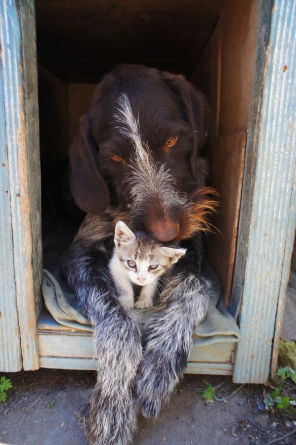 fondos de pantalla animales tiernos, mascota, mascotas, perro, gato, felino, gatuno, can, canino, peludo, juguetón , tierno, animal, animales, animal doméstico, amistad, pelaje, bigotes, hocico, dulce, dulzura, sabueso, gatito, imagenes de gatitos y perritos tiernos, fondos de pantalla HD, HD, salvapantallas, fondos, imagenes, imagenes gratis, fotografia, gratis, gratuito, cachorro