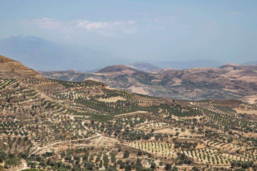 grecia, europa, viñedo, paisaje, dia,