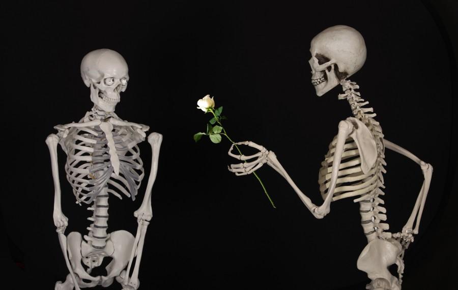 esquelético, flor, felicidades, amistad, amor, huesos, esqueleto, fondo negro, rosa blanca, concepto