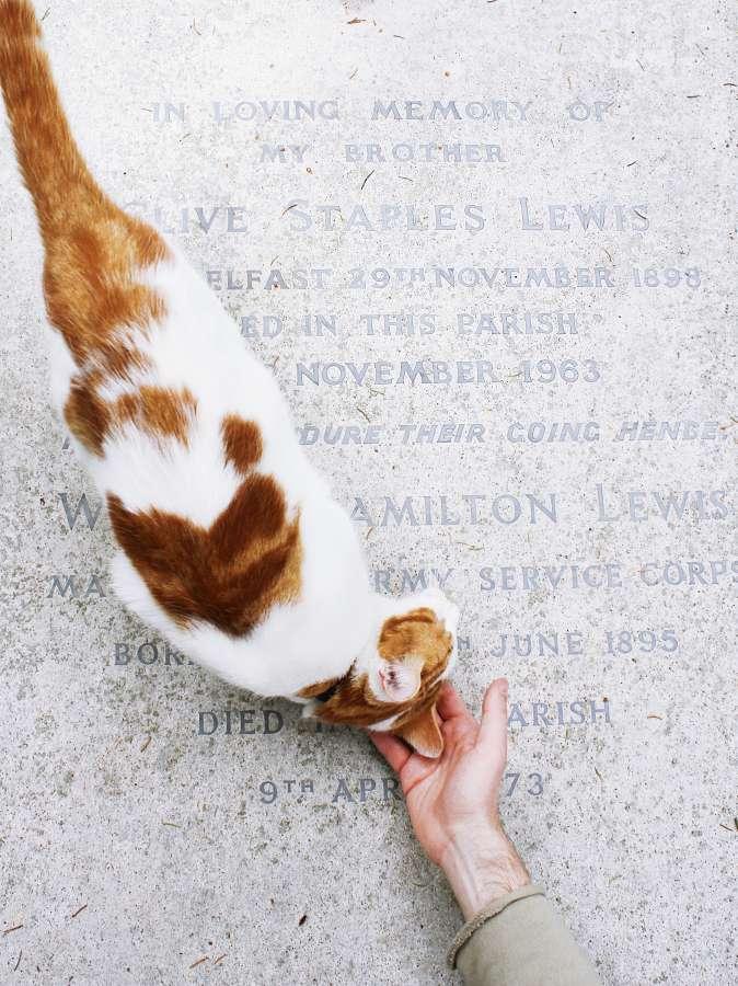 gato, caricia, cariño, amor, mascota, animal, tierno,