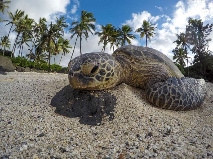 tortuga, reptil, animal, cara, primer plano, mirada, serio, salvaje, naturaleza, isla, tropical, playa, arena,