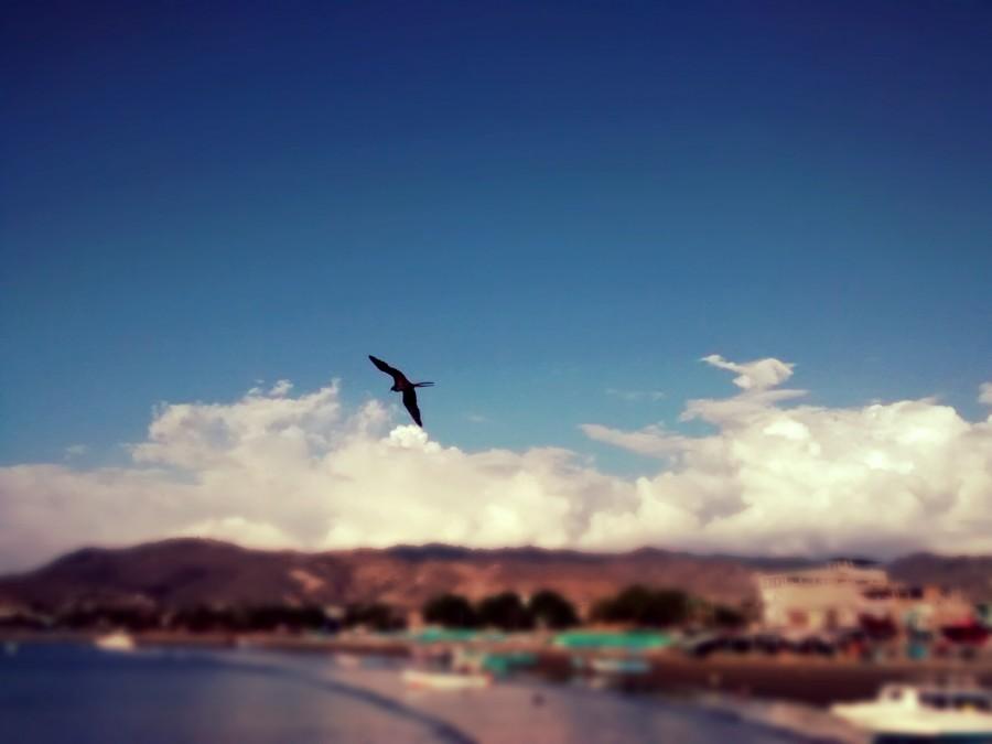 Puerto Lopez, ecuador, paisaje, ave, gaviota, pelicano, costa, pacifico, america latina, latino,