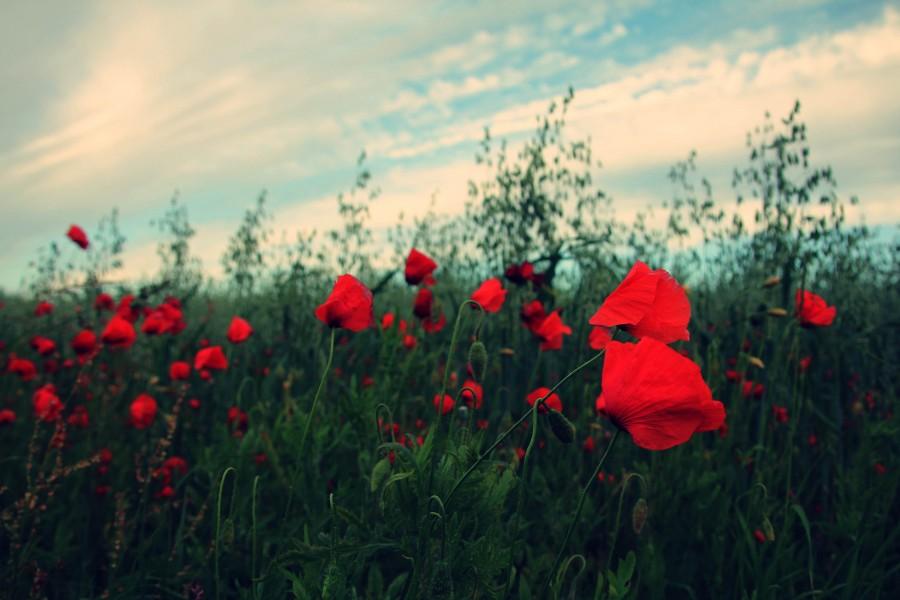 Imagen De Campo Con Flores Foto Gratis