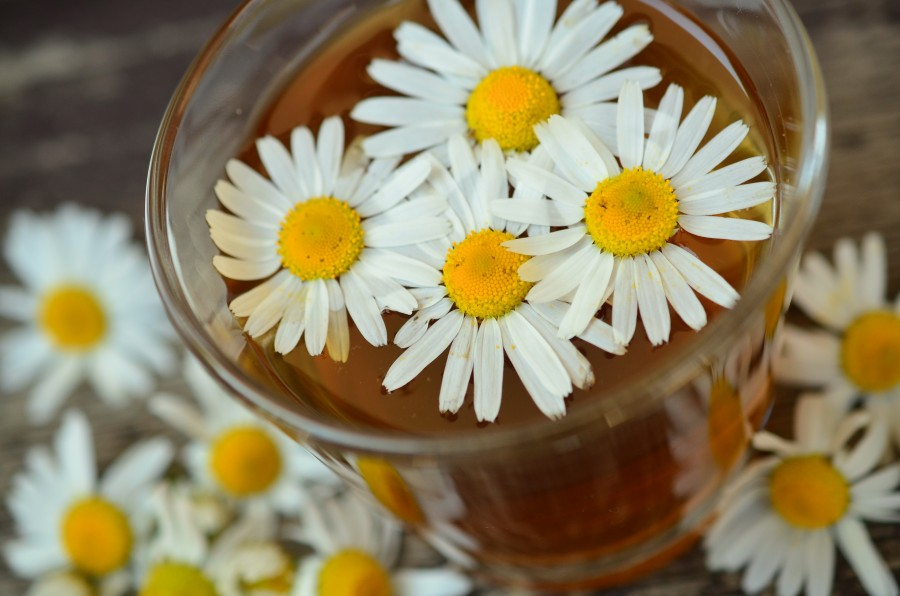 manzanilla, te, infusion, remedio, natural, caliente, bebida, flor, medicina,