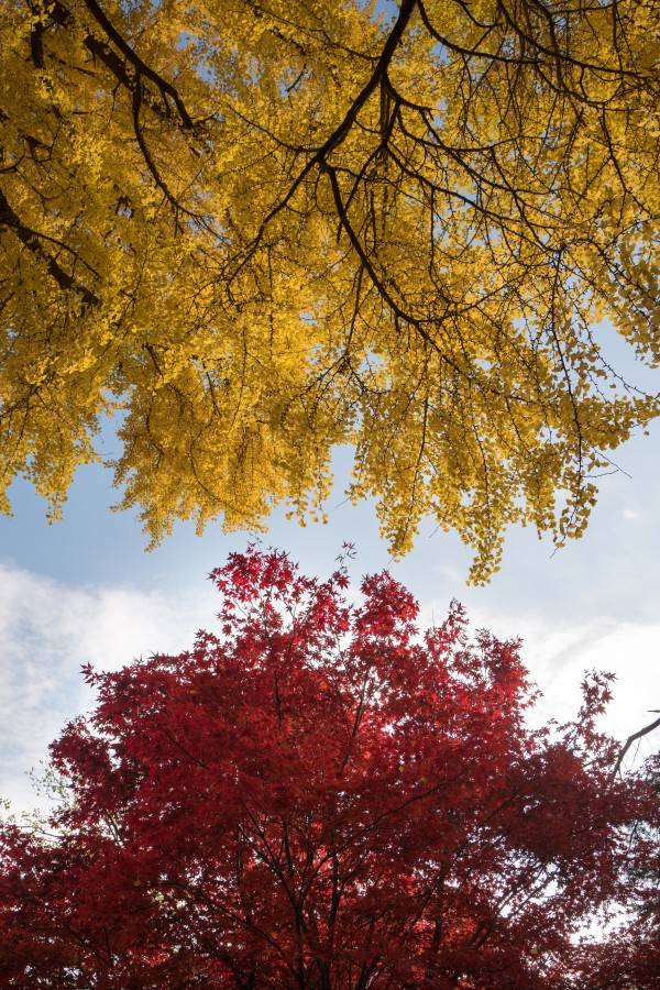 otoño, arbol, arboles, textura, cielo, rojizo, otoñal, fondo, background,