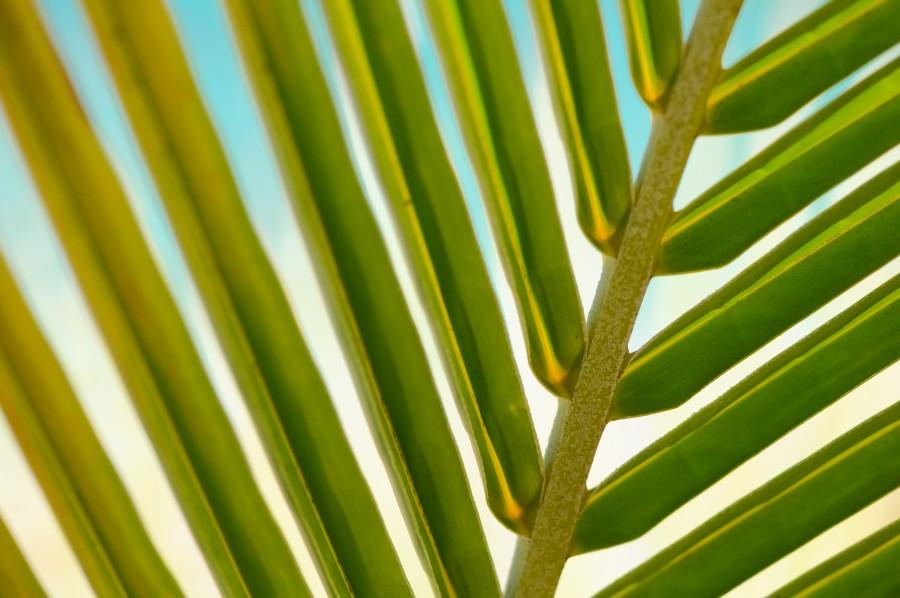 Ed Gregory, Fotografia de archivo, fotos de archivo, Stokpic, arboles, extracto, fondo, closup,hoja, lineas, palma, palmera, planta, formas, sol, viajes ecologico, ecologia,