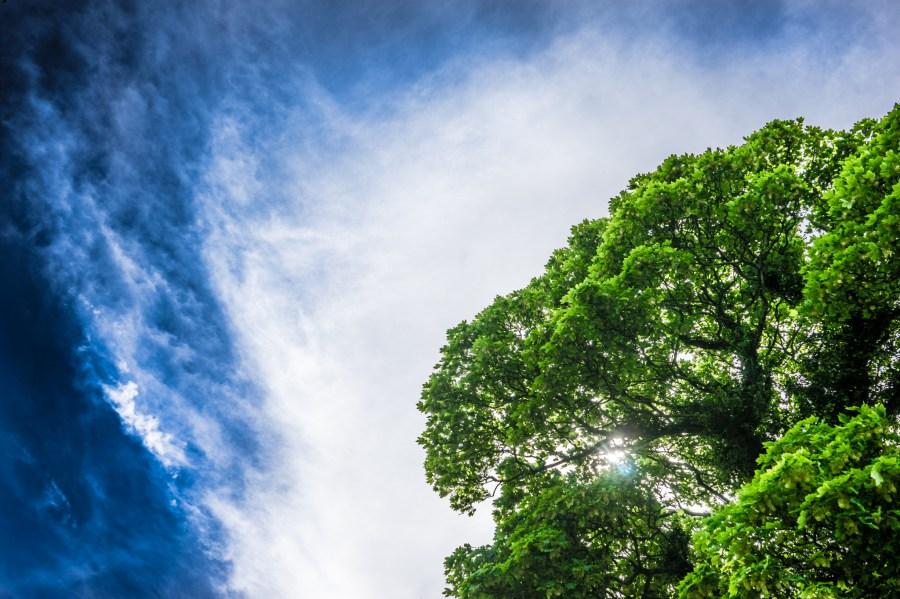 paisaje, cielo, verde, arbol, arboles, luz, luces, tormenta, naturaleza, fondo, background, dia, contraste, color, colores, nube, nubes,