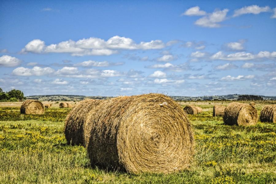 fardo, campo, Garzon, Uruguay, abarrote, bala , cabuya , tamal , calar , fleje, largar, paca, cielo, paisaje, campestre, pastizal