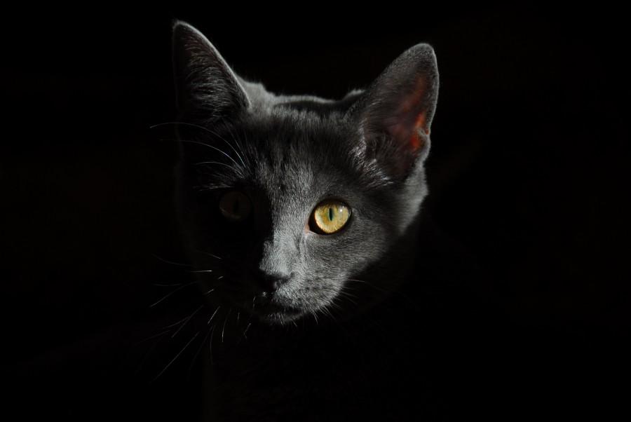 gatito, bebé de gato, animales jóvenes, agresivo, caza, gato, pieles, encantadora, animales, carnívoros, lindo, esponjoso, cabello, bebé, mamífero, pata, mascotas, juguetón, retrato, pura sangre, pequeños, curioso, querido , fotos gratis,  imágenes gratis, Gato doméstico, Cabeza de animal, Retrato, Gato melado, Monada, Gatito, Animal, Fotografía, Mirando a la cámara, Animal doméstico, Animal joven, Color, Día, Horizontal, Interior, Mascota, Nadie, Ojo de Animal, Parte del cuerpo animal, Temas de animales, Un animal, adorable, tierno, mascota, peludo, melena, colores, pelos, rayas, felino, minino, micifuz, michino, madrileño, felido, gatuno, fondo negro, oscuro, ojos verdes, gris, fondos de pantalla hd, fondos de pantalla 4k, resolucion 4k, salvapantalla