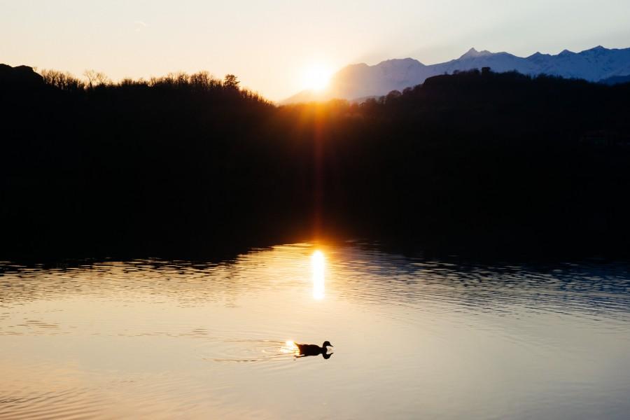lago, laguna, pato, paisaje, naturaleza, atardecer, animal,