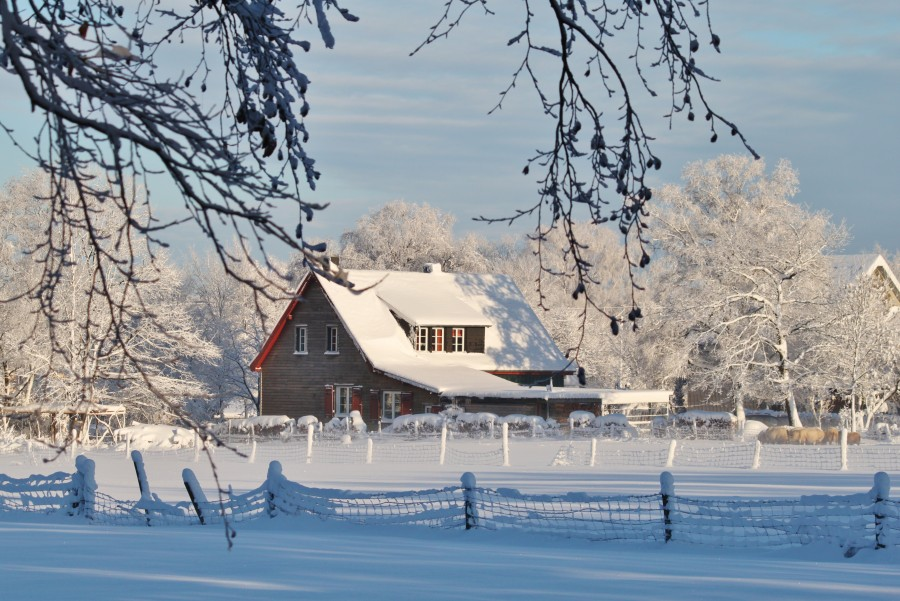 nieve, frío, invierno, árbol, hoja seca, helar, frescura, baja temperatura, frialdad, fresco, gélido, congelado, nevado, cerco, casa, cabaña