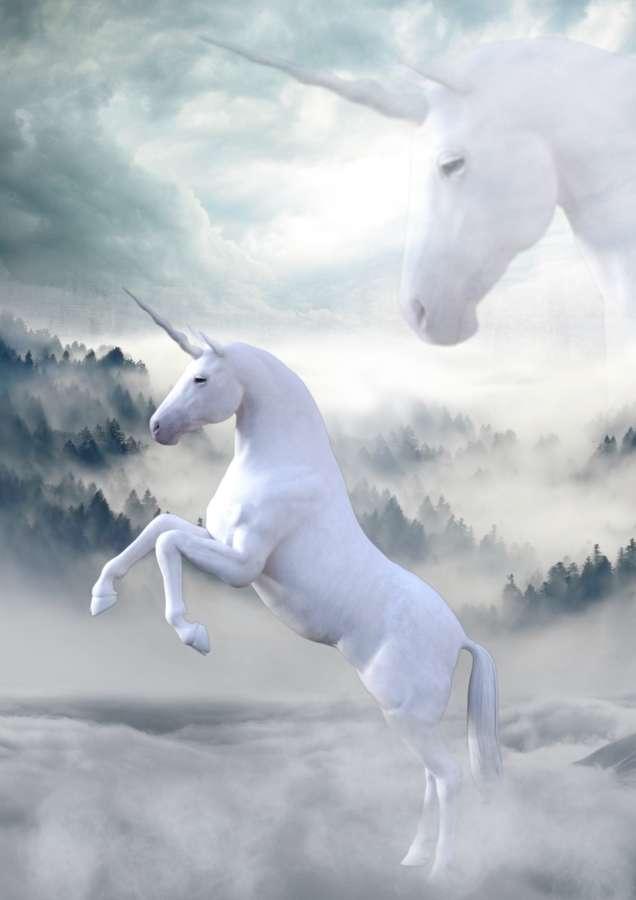 Imagen de Unicornios reales - Foto Gratis 100011197