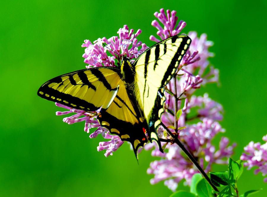 mariposa, insecto, primer plano, colorido, naturaleza, amarillo, bosque, alas, fondos de pantalla hd, fondos de pantalla 4k