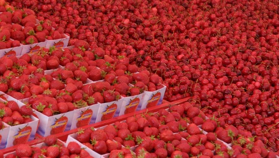 Estocolmo,Stockholm,Sweden,Svenska,Suecia,fruta,fruit,market,mercado,rojo,red,rot,cerezas,cherries,fresas,strawberries,frutas, fondo, background,