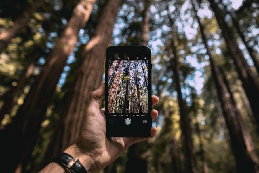 fotografia, smartphone, phone, foto, tomar, vacaciones, bosque, exterior, dia, hombre, aventura, arbol, arboles, viaje, naturaleza, paisaje, belleza,