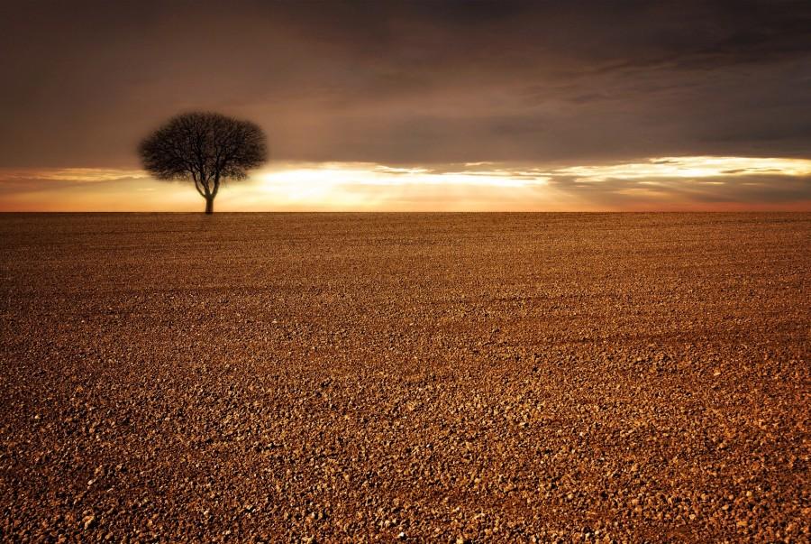 arbol, desierto, atardecer, rayos de sol, forma, solo, uno, paisaje, desertico, solitario,
