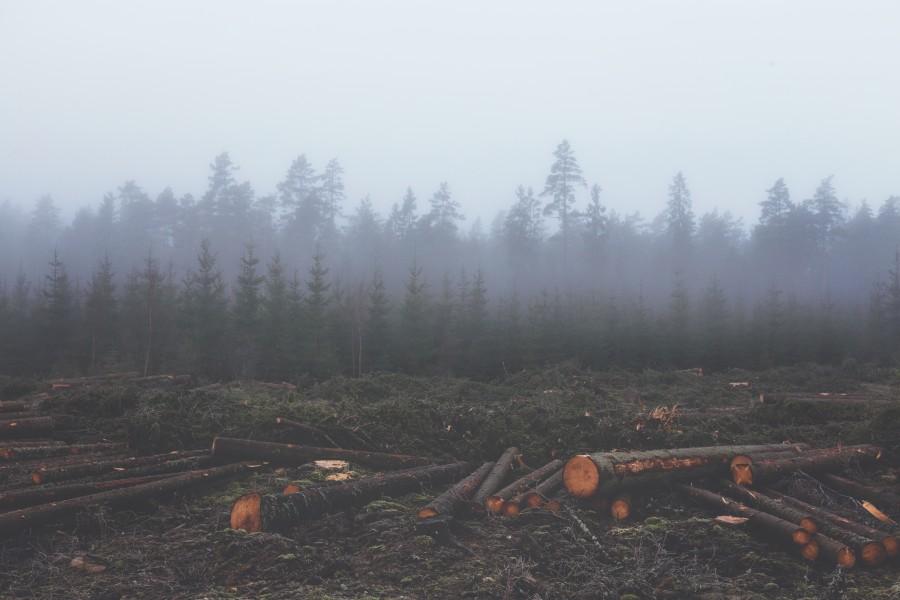 deforestacion, maderera, medio ambiente, tala, talar, arbol, arboles, cortado, cortados, industria, bosque, pino, pinos,