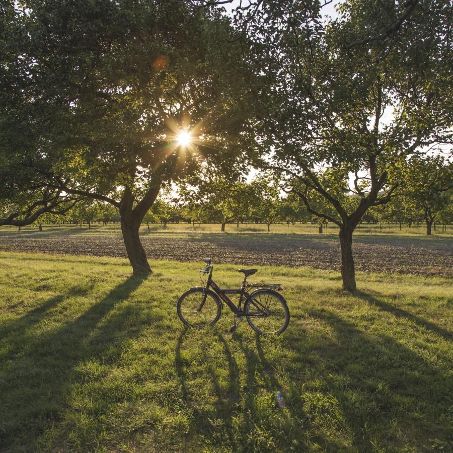 bicicleta, campo, atardecer, aire libre, exterior, rayo de sol, nadie,