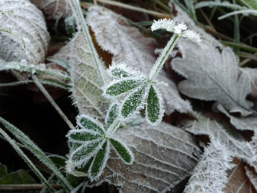 hojas, textura, naturaleza, hielo, congelado, cristal, cristales, frio, invierno, nadie,
