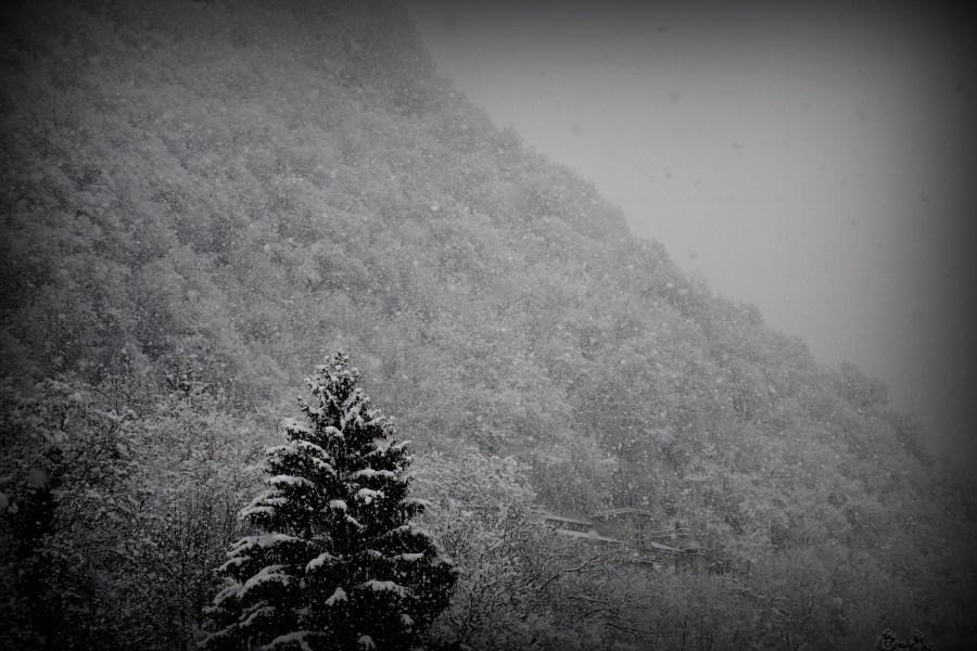 Imagen De Blanco Y Negro, Montaña, Nieve, Invierno, Pino