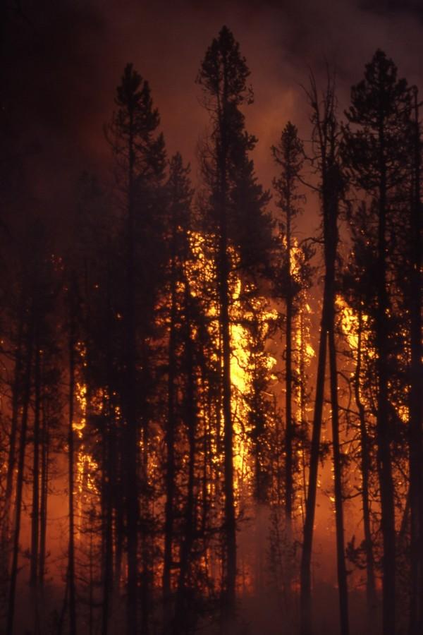 incendio, bosque, fuego, nocturno, noche, nadie, incendio forestal