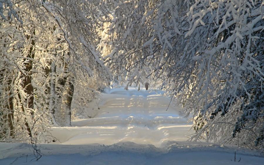 paisaje, nieve, nevado, bosque, amanecer, mañana, nadie, naturaleza, camino, calle,