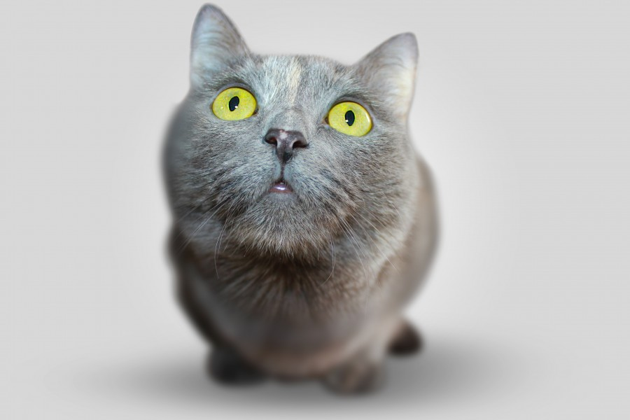 gatito, bebé de gato, animales jóvenes, agresivo, caza, gato, pieles, encantadora, animales, carnívoros, lindo, esponjoso, cabello, bebé, mamífero, pata, mascotas, juguetón, retrato, pura sangre, pequeños, curioso, querido , fotos gratis,  imágenes gratis, Gato doméstico, Cabeza de animal, Retrato, Gato melado, Monada, Gatito, Animal, Fotografía, Mirando a la cámara, Animal doméstico, Animal joven, Color, Día, Horizontal, Interior, Mascota, Nadie, Ojo de Animal, Parte del cuerpo animal, Temas de animales, Un animal, adorable, tierno, mascota, peludo, melena, colores, pelos, rayas, felino, minino, micifuz, michino, madrileño, felido, gatuno, fondos de pantalla hd, fondos de pantalla 4k, resolucion 4k, salvapantalla