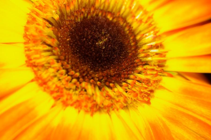 hermosa, flor, flora, flores, fondos de pantalla hd, hojas, naturaleza, belleza, natural, hojas, primavera, pimpollo, pétalos, degradé de color, florecer, yerberas