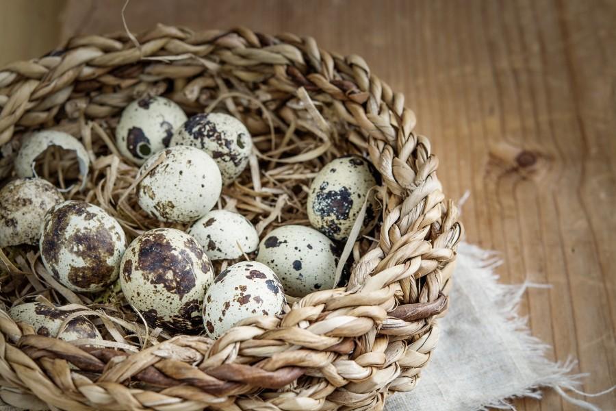 huevo, huevos, codorniz, canasta, cesto, madera, pascuas,