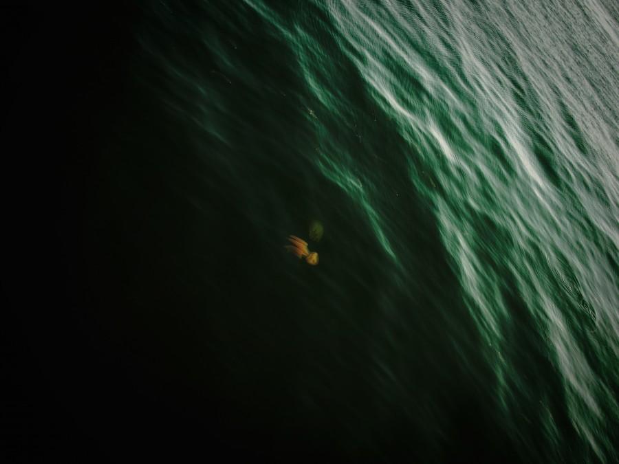 calamar, mar, fauna marina, fauna, oceano, vista de arriba, uno, animal,