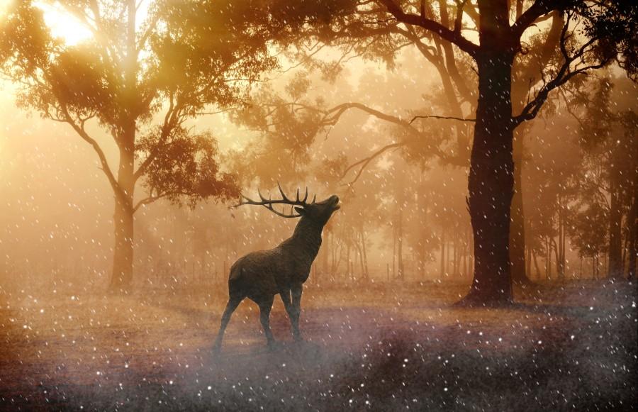 mistico, magico, magia, bosque, encantado, alce, reno, cuernos, animal, mitologico, mitologia, soñar, sueño, idilico,