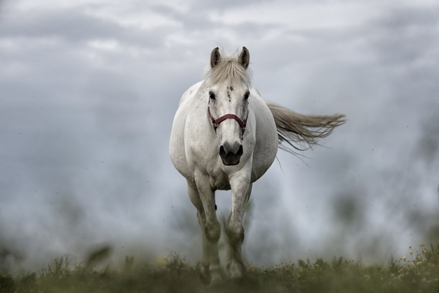 caballo, blanco, animal, primer plano, naturaleza, uno, primer plano, vista de frente, fondos de pantalla hd, fondos de pantalla 4k