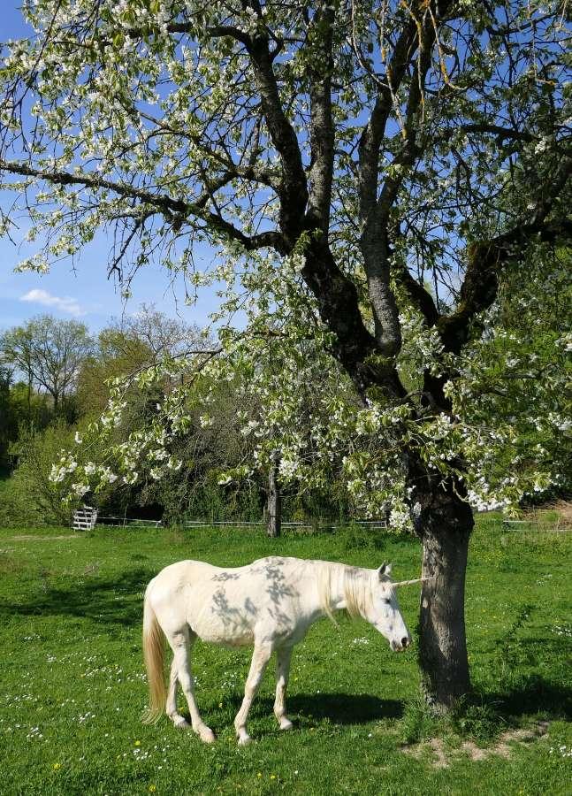 imagen de unicornio real