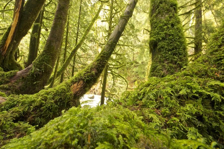 naturaleza, verde, selva, arbol, musgo, paisaje,