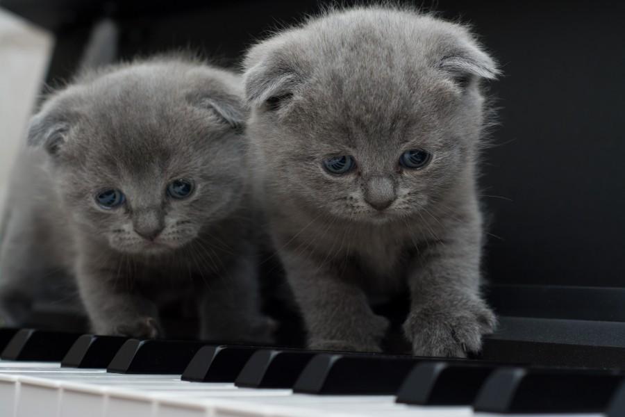 gatos grises significado
