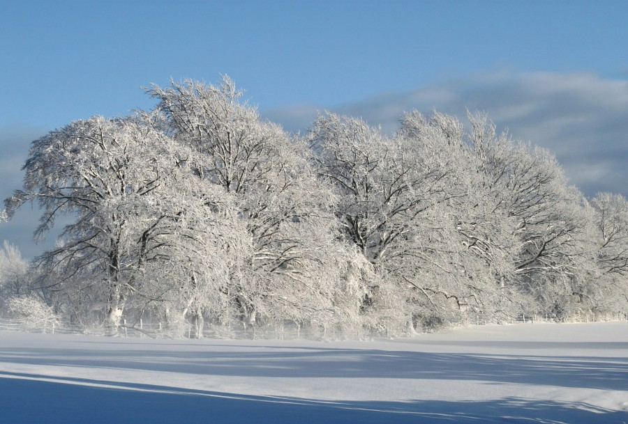 invierno, nieve, árboles, nieve, hivernal, nieve, frío, invierno, árbol, hoja seca, glaseado, frescura, baja temperatura, frío, fresco, frío, congelado, nieve