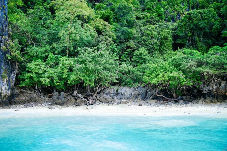 playa, caribe, nadie, selva, bosque, paisaje, verano, costa, mar, virgen, turismo, turistico, viaje, viajar,