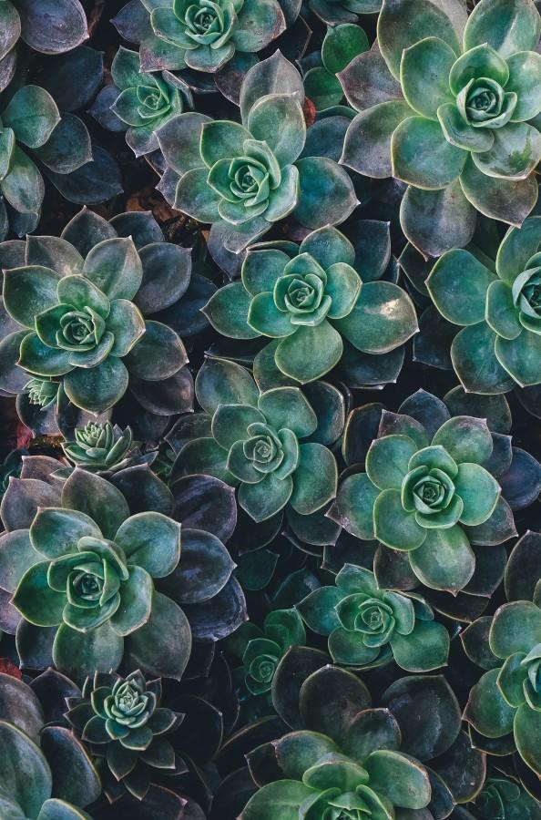 flores, naturaleza, petalos, plantas, belleza, colorido, primavera, verde, jardin, suculenta