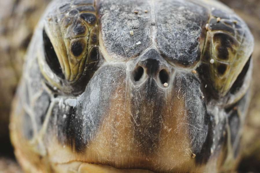 tortuga, reptil, animal, cara, primer plano, mirada, serio, salvaje, naturaleza,