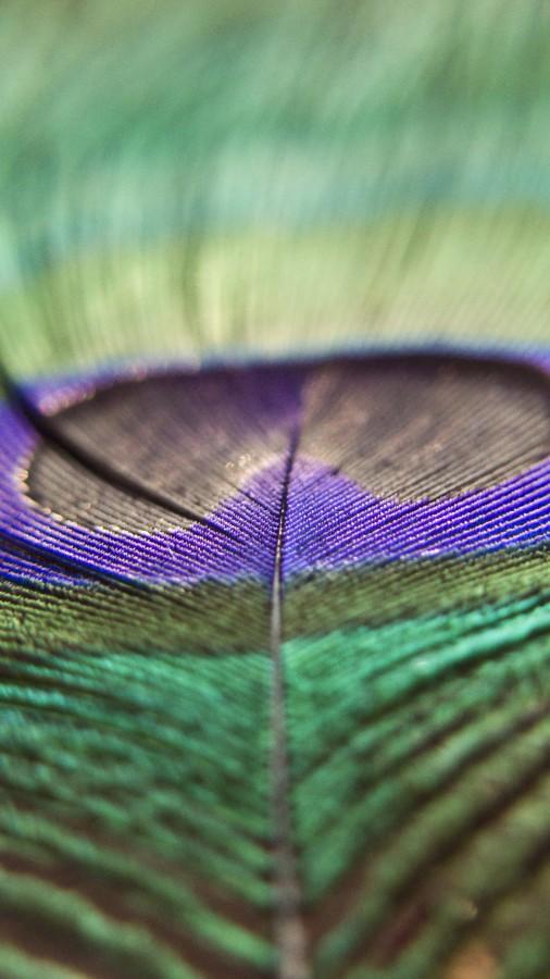 pluma, ave, color, colorido, pavo real, pavo, detalle, primer plano, textura, naturaleza, fondo, background,