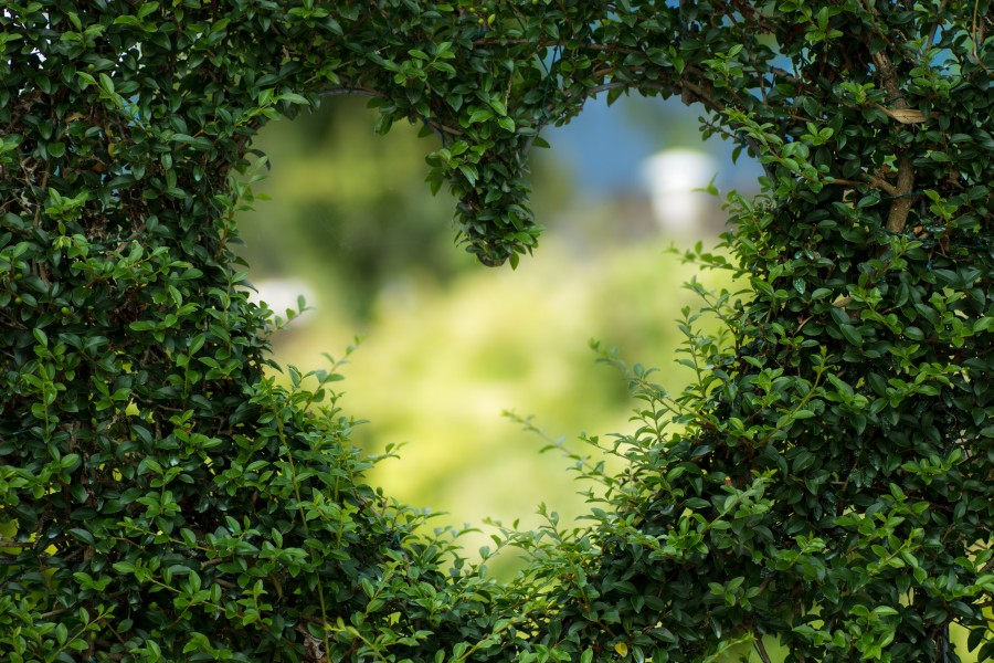 naturaleza, verde, desenfoque, bokeh, corazón, forma, arbusto, romántico, amor, novios, pareja, enamorar, dulce, dulzura, tierno, ternura, novia, novio, imagenes en hd de amor, imagenes de amor tiernas para celular, fondos de pantalla amor, fondos de pantalla Hd, imágenes gratis de amor, imagenes para enamorar, fondos de pantalla, salvapantallas