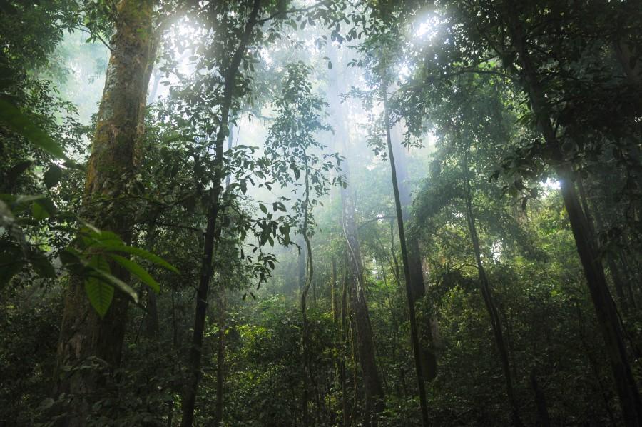 flora, bosque, verde, selva, hojas, natural, naturaleza, plantas, selva, luz del sol, árbol, salvaje, madera, arbolado,