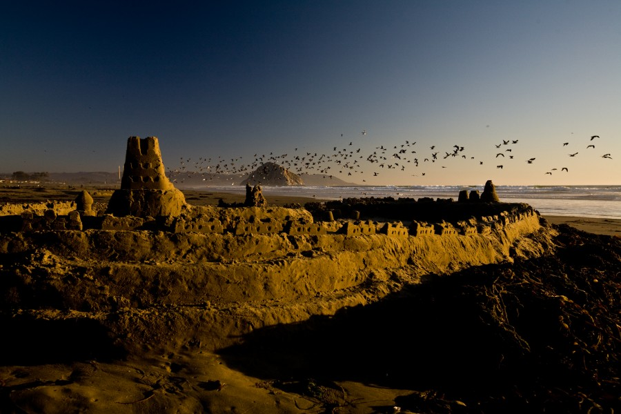 atardecer, ocaso, puesta de sol, playa, costa, california, usa, estados unidos, ave, aves, gaviota, gaviotas, paisaje,