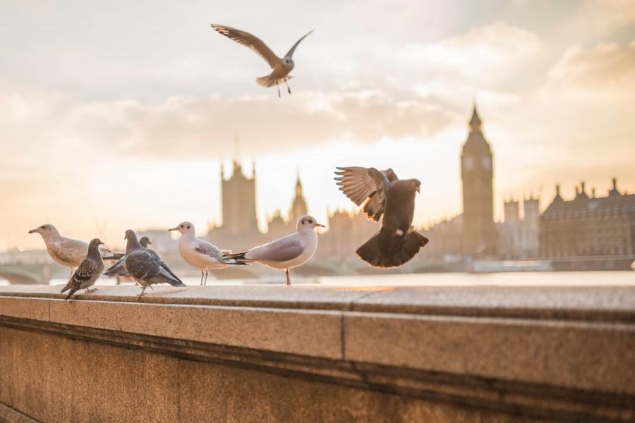 paisaje, dia, urbano, ciudad, exterior, paloma, palomas, ave, aves,