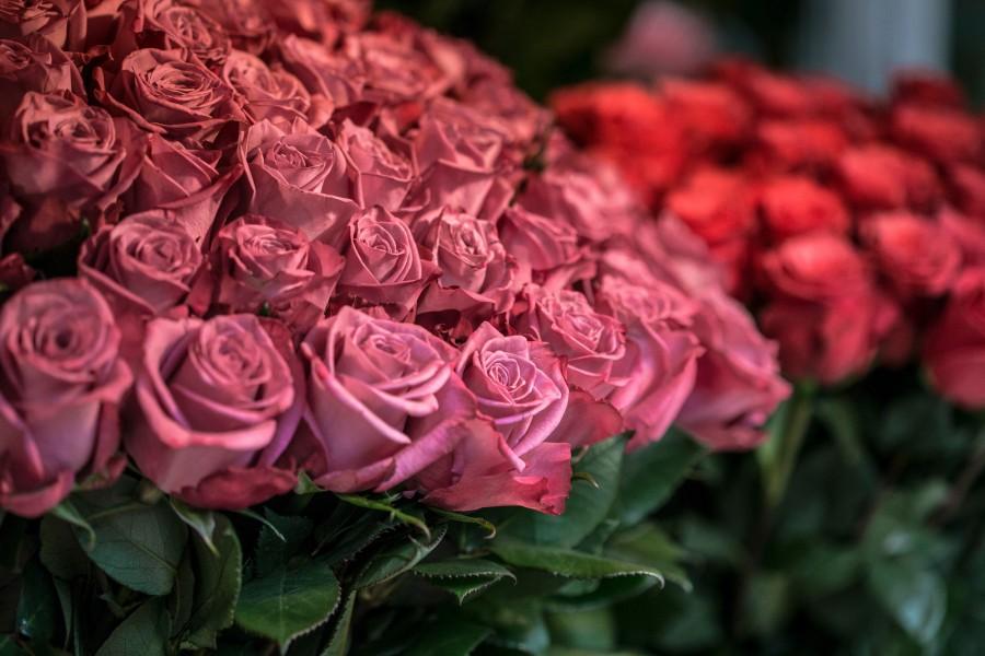 rosas, rosa, flor, flores, ramo, ramo de flores, fragancia, perfume, docena, floreria,