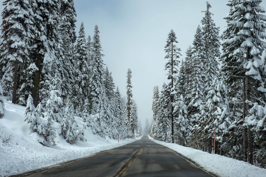ruta, carretera, nevado, nieve, camino, nadie, paisaje, primer plano, asfalto, invierno, pinos,